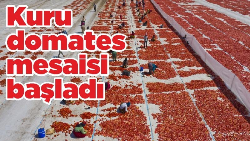 Kuru domates mesaisi başladı